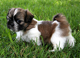 mt-0233-dog-breeds-img9.jpg